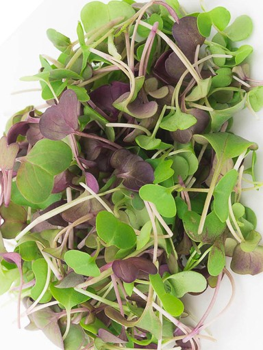Micro Salad Mix Spicy Greens