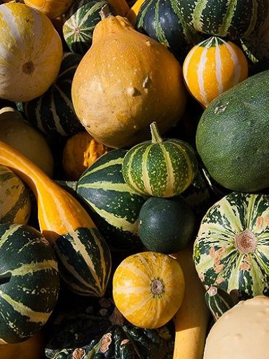 Small Fruits Gourd Mix