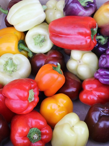 Sweet Rainbow Mix Peppers