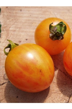 Bumble Bee Sunrise Tomato