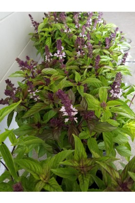 Cinnamon Bouquet Basil