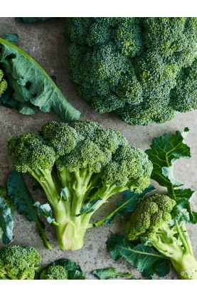 Early Dream Broccoli