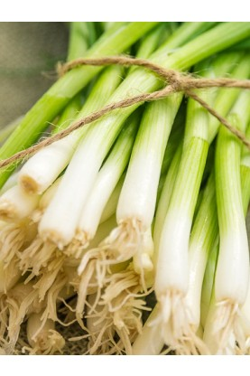 Evergreen Hardy White Onions