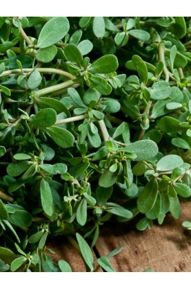 Goldberg Purslane