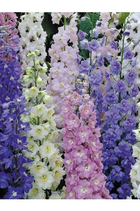 Larkspur QIS Mix