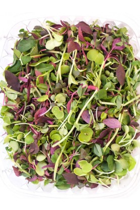 Micro Salad Mix Mild Greens