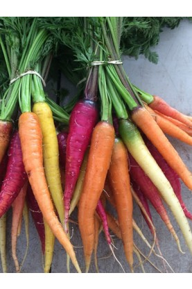 Rainbow Mix Carrots