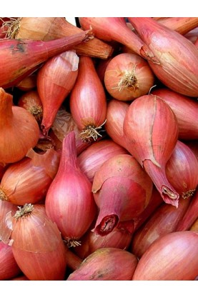 Red Gourmet Shallots