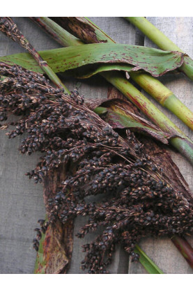 Sorghum Black Amber Seeds - Broom Corn