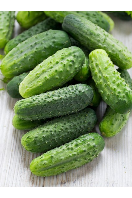 Northern Pickling Cucumbers