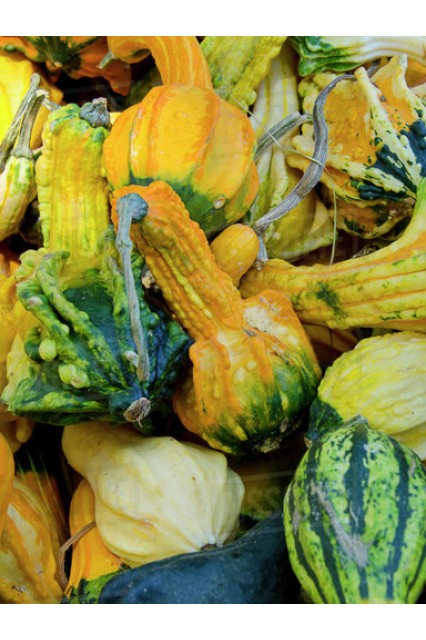 Winged Gourd Mix