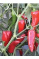 Flaming Flare Peppers