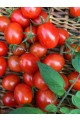 Jelly Bean Red F1 Tomato