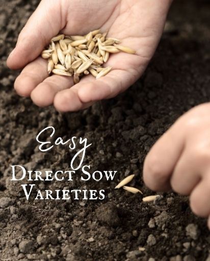 Easy Direct Sow Seeds