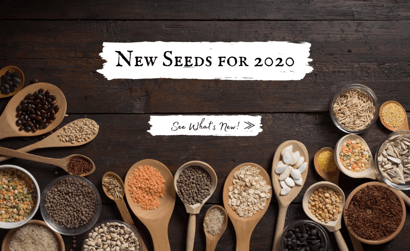 Shop New Vegetable, Flower and Herb Seeds for 2020