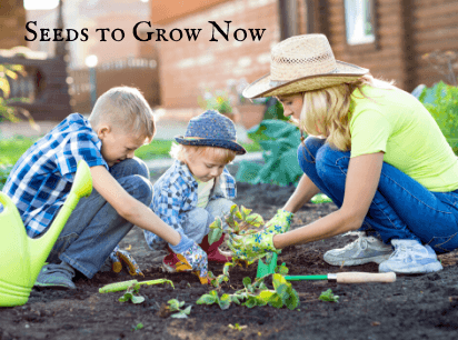 Shop Seeds to Sow Now